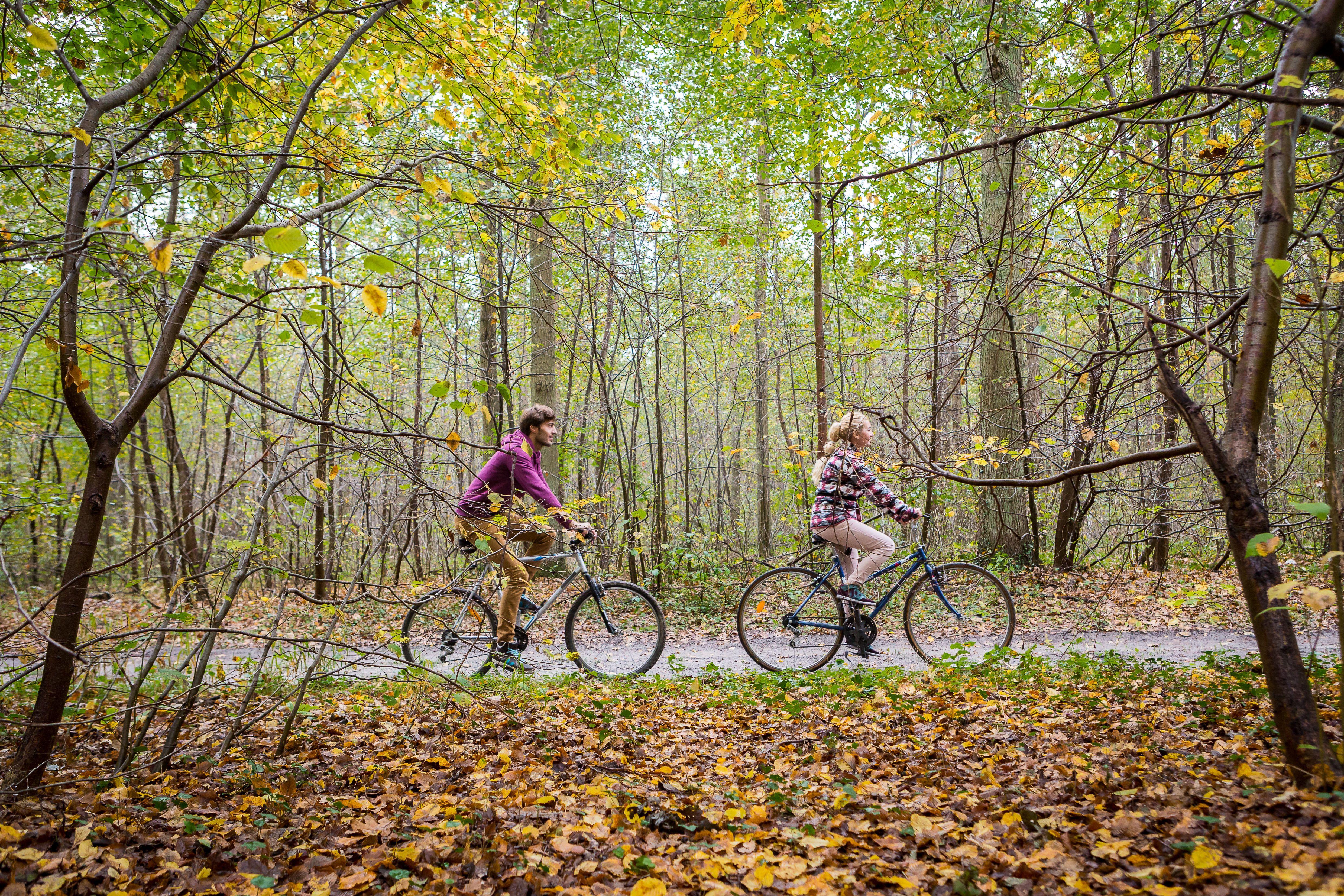 piste-cyclable-forêt-compiègne